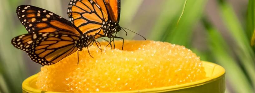 Die Schmetterling-Erlebniswelt in Pfronten