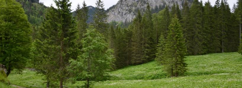 Rundwanderung vom Tegelberg zur Ahornspitze über die Bleckenau